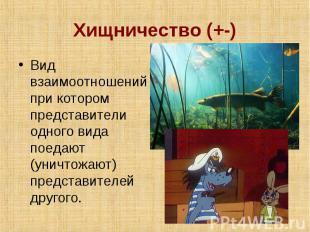 Хищничество (+-) Вид взаимоотношений при котором представители одного вида поеда
