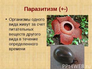 Паразитизм (+-) Организмы одного вида живут за счет питательных веществ другого