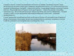 В прудах в очистке сточных вод принимают участие все организмы, населяющие водое