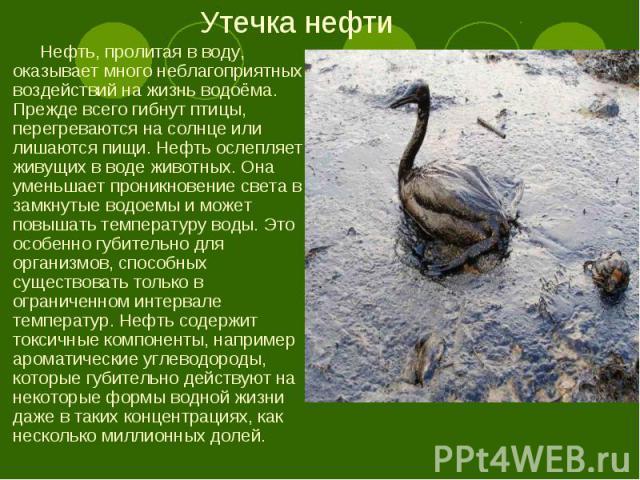 Нефть, пролитая в воду, оказывает много неблагоприятных воздействий на жизнь водоёма. Прежде всего гибнут птицы, перегреваются на солнце или лишаются пищи. Нефть ослепляет живущих в воде животных. Она уменьшает проникновение света в замкнутые водоем…