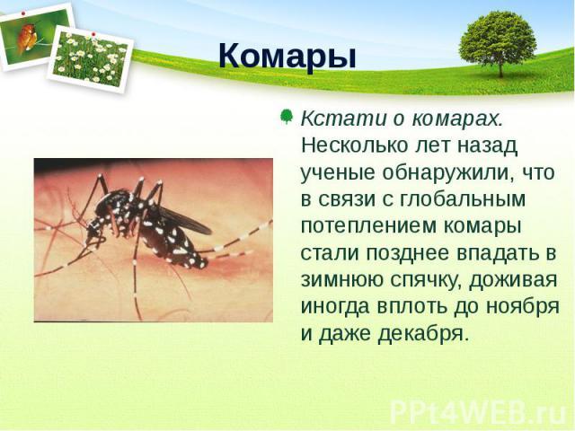 Кстати о комарах. Несколько лет назад ученые обнаружили, что в связи с глобальным потеплением комары стали позднее впадать в зимнюю спячку, доживая иногда вплоть до ноября и даже декабря. Кстати о комарах. Несколько лет назад ученые обнаружили, что …