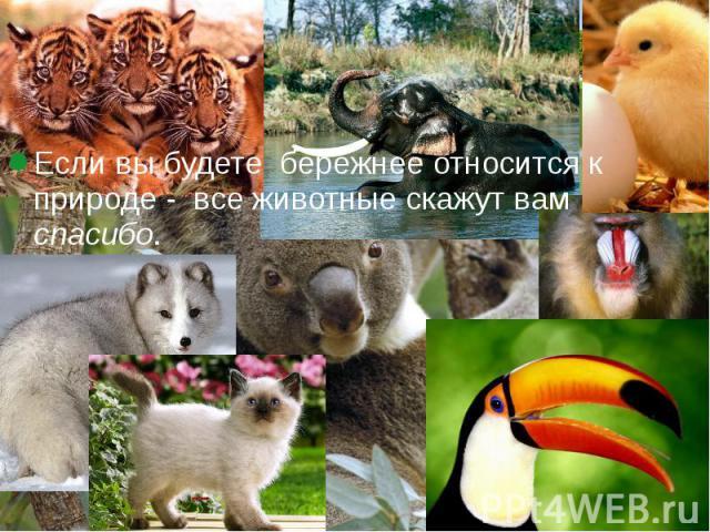 Если вы будете бережнее относится к природе - все животные скажут вам спасибо. Если вы будете бережнее относится к природе - все животные скажут вам спасибо.