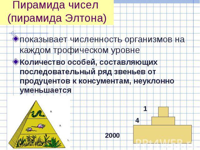 показывает численность организмов на каждом трофическом уровне показывает численность организмов на каждом трофическом уровне Количество особей, составляющих последовательный ряд звеньев от продуцентов к консументам, неуклонно уменьшается
