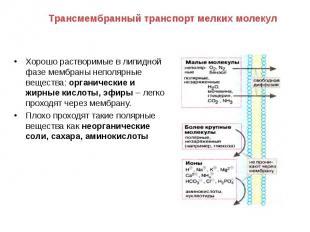 Хорошо растворимые в липидной фазе мембраны неполярные вещества: органические и