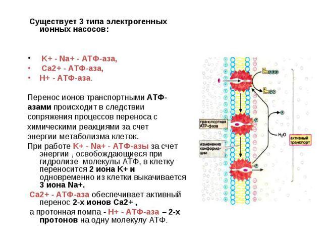 Существует 3 типа электрогенных ионных насосов: K+ - Na+ - АТФ-аза, Са2+ - АТФ-аза, Н+ - АТФ-аза. Перенос ионов транспортными АТФ- азами происходит в следствии сопряжения процессов переноса с химическими реакциями за счет энергии метаболизма клеток.…