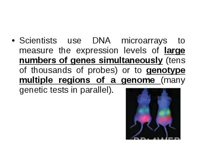 Scientists use DNA microarrays to measure the expression levels of large numbers of genes simultaneously (tens of thousands of probes) or to genotype multiple regions of a genome (many genetic tests in parallel). Scientists use DNA microarrays to me…