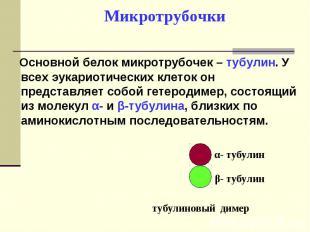 Основной белок микротрубочек – тубулин. У всех эукариотических клеток он предста