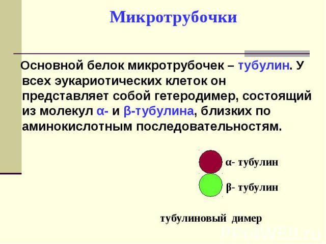 Основной белок микротрубочек – тубулин. У всех эукариотических клеток он представляет собой гетеродимер, состоящий из молекул α- и β-тубулина, близких по аминокислотным последовательностям. Основной белок микротрубочек – тубулин. У всех эукариотичес…