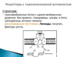 Структура: Структура: трансмембранные белки с одним мембранным доменом. Как прав