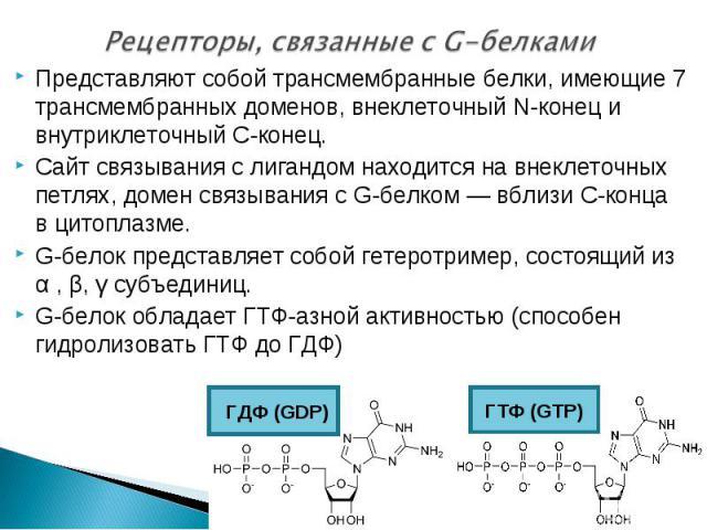 Представляют собой трансмембранные белки, имеющие 7 трансмембранных доменов, внеклеточный N-конец и внутриклеточный C-конец. Представляют собой трансмембранные белки, имеющие 7 трансмембранных доменов, внеклеточный N-конец и внутриклеточный C-конец.…
