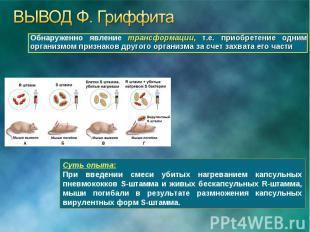 Обнаруженно явление трансформации, т.е. приобретение одним организмом признаков