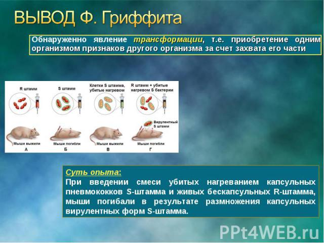 Обнаруженно явление трансформации, т.е. приобретение одним организмом признаков другого организма за счет захвата его части Обнаруженно явление трансформации, т.е. приобретение одним организмом признаков другого организма за счет захвата его части