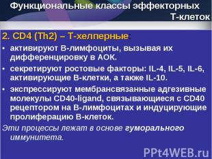 2. CD4 (Th2) – Т-хелперные: 2. CD4 (Th2) – Т-хелперные: активируют В-лимфоциты,