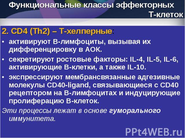 2. CD4 (Th2) – Т-хелперные: 2. CD4 (Th2) – Т-хелперные: активируют В-лимфоциты, вызывая их дифференцировку в АОК. секретируют ростовые факторы: IL-4, IL-5, IL-6, активирующие В-клетки, а также IL-10. экспрессируют мембрансвязанные адгезивные молекул…