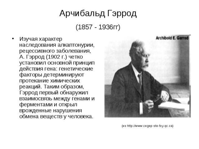 Арчибальд Гэррод (1857 - 1936гг) Изучая характер наследования алкаптонурии, рецессивного заболевания, А. Гэррод (1902 г.) четко установил основной принцип действия гена: генетические факторы детерминируют протекание химических реакций. Таким образом…