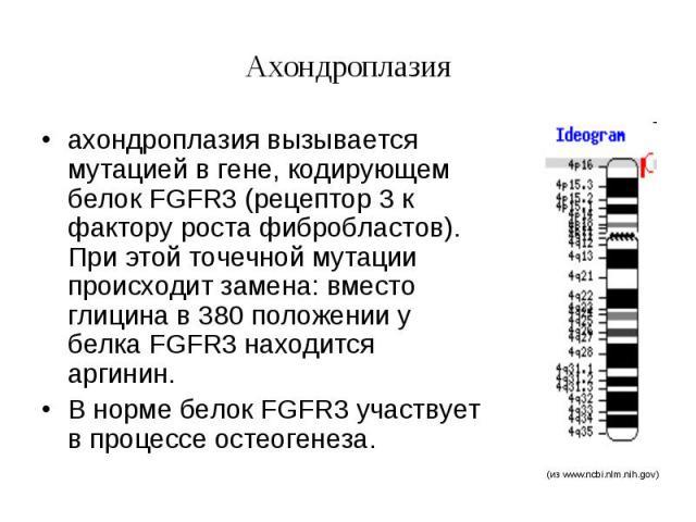 Ахондроплазия ахондроплазия вызывается мутацией в гене, кодирующем белок FGFR3 (рецептор 3 к фактору роста фибробластов). При этой точечной мутации происходит замена: вместо глицина в 380 положении у белка FGFR3 находится аргинин. В норме белок FGFR…