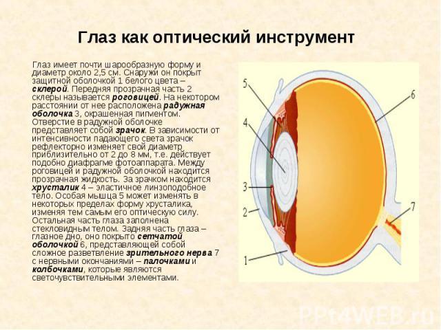 Глаз как оптический инструмент Глаз имеет почти шарообразную форму и диаметр около 2,5см. Снаружи он покрыт защитной оболочкой 1 белого цвета – склерой. Передняя прозрачная часть 2 склеры называется роговицей. На некотором расстоянии от нее ра…
