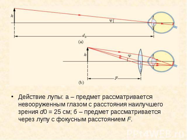 Действие лупы: а–предмет рассматривается невооруженным глазом с расстояния наилучшего зрения d0=25см; б–предмет рассматривается через лупу с фокусным расстоянием F. Действие лупы: а–предмет рассм…