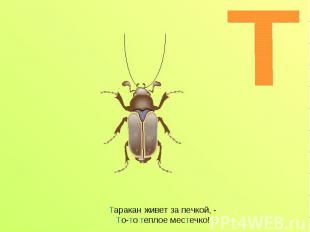 Таракан живет за печкой, - То-то теплое местечко!