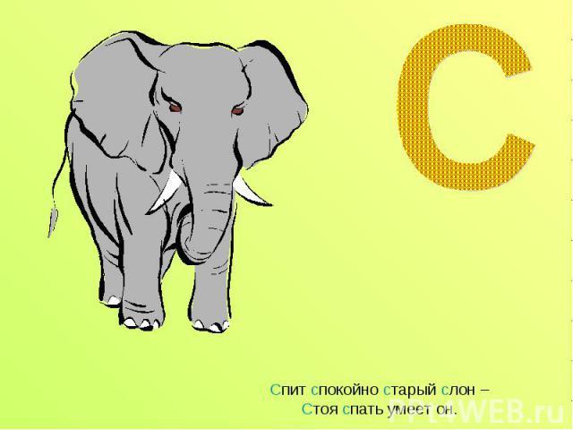 Спит спокойно старый слон – Стоя спать умеет он.