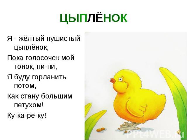 ЦЫПЛЁНОК Я - жёлтый пушистый цыплёнок, Пока голосочек мой тонок, пи-пи, Я буду горланить потом, Как стану большим петухом! Ку-ка-ре-ку!