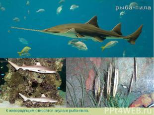К живородящим относятся акула и рыба-пила.
