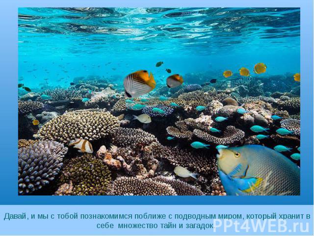 Давай, и мы с тобой познакомимся поближе с подводным миром, который хранит в себе множество тайн и загадок.