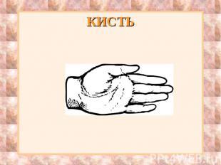 КИСТЬ