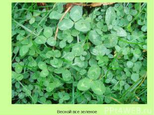 Весной все зеленое Весной все зеленое