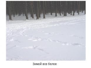 Зимой все белое Зимой все белое