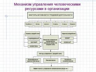 Механизм управления человеческими ресурсами в организации