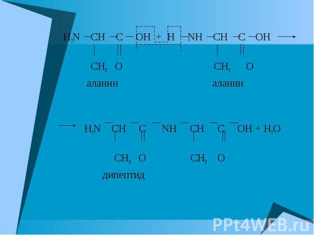 H2N CH C OH + H NH CH C OH CH3 O CH3 O аланин аланин H2N CH C NH CH C OH + H2O CH3 O CH3 O дипептид