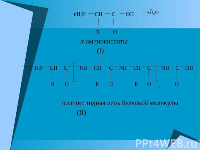 nH2N CH C OH nH2N CH C OH R O α-аминокислоты (I) H2N CH C NH CH C NH CH C NH C OH R O R O R O m O полипептидная цепь белковой молекулы (II)