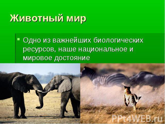 Одно из важнейших биологических ресурсов, наше национальное и мировое достояние Одно из важнейших биологических ресурсов, наше национальное и мировое достояние