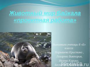 Животный мир Байкала «проектная работа» Выполнили ученицы 8 «Б» класса Нарышева