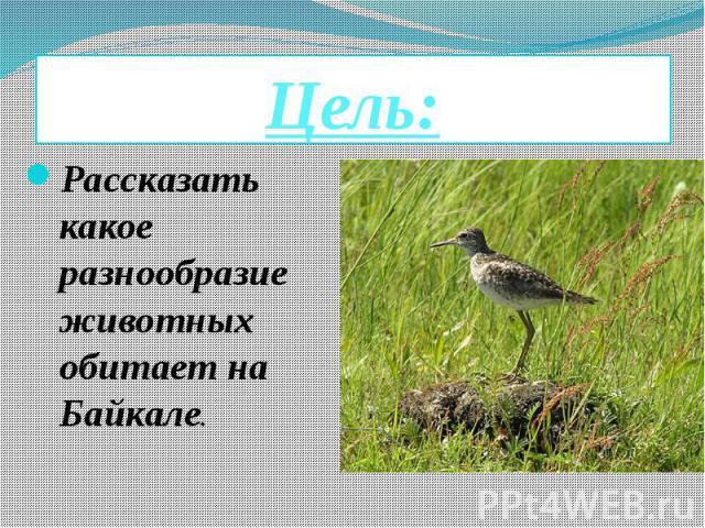 Цель: Рассказать какое разнообразие животных обитает на Байкале.