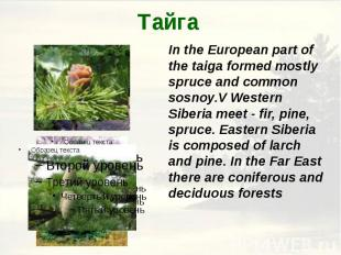Тайга In the European part of the taiga formed mostly spruce and common sosnoy.V