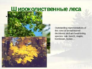 Широколиственные леса
