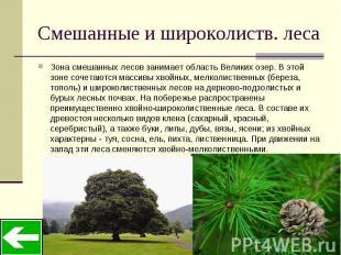 Смешанные и широколиств. леса Зона смешанных лесов занимает область Великих озер