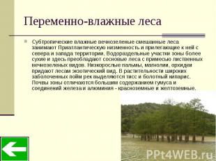 Переменно-влажные леса Субтропические влажные вечнозеленые смешанные леса занима