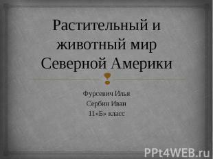 Растительный и животный мир Северной Америки Фурсевич Илья Сербин Иван 11«Б» кла