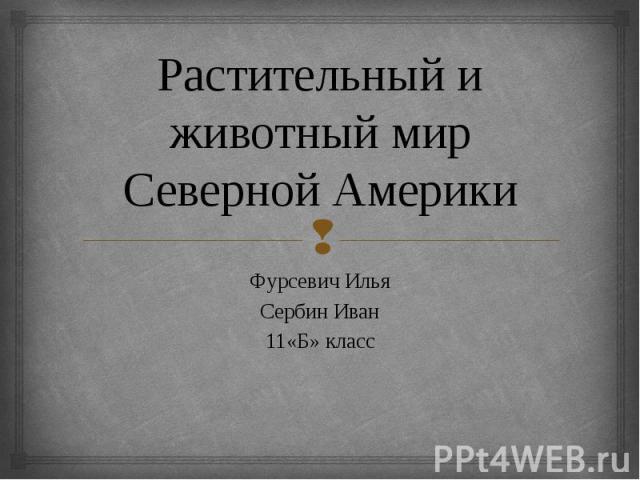 Растительный и животный мир Северной Америки Фурсевич Илья Сербин Иван 11«Б» класс