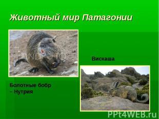 Животный мир Патагонии