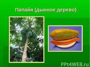 Папайя (дынное дерево)