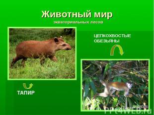 Животный мир экваториальных лесов