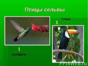 Птицы сельвы
