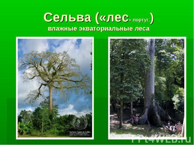 Сельва («лес» португ.) влажные экваториальные леса