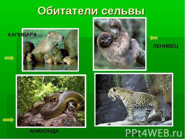 Обитатели сельвы