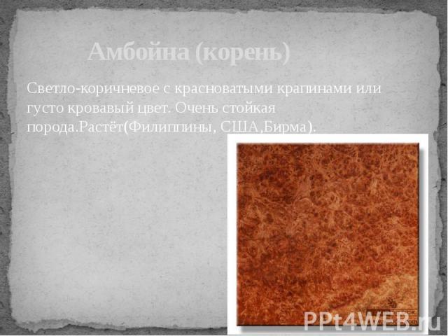 Амбойна (корень) Светло-коричневое с красноватыми крапинами или густо кровавый цвет. Очень стойкая порода.Растёт(Филиппины, США,Бирма).