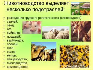 Животноводство выделяет несколько подотраслей: разведение крупного рогатого скот